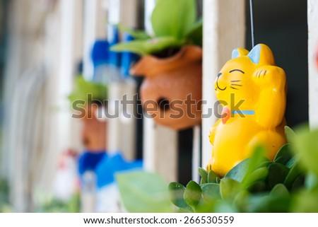 yellow cat plaster on pot garden,cat focus - stock photo