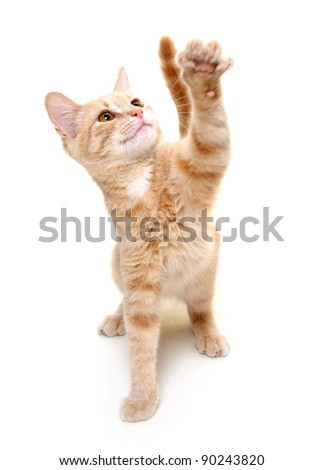 Yellow cat playing on white background