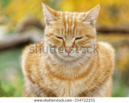 Yellow cat sit in the loaf pose in autumn park, eyes nearly closed, and its body looks like a love heart. - stock photo