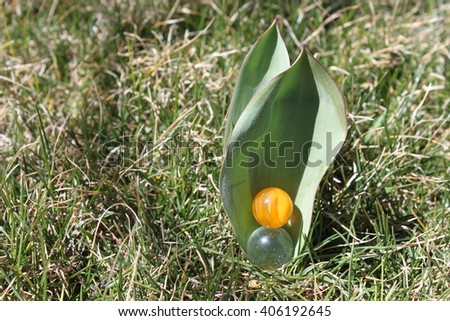 Yellow cats-eye marble in Tulip Leaf - stock photo