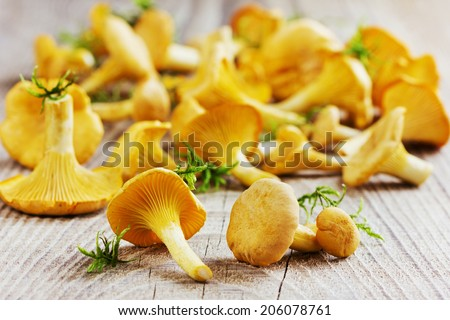 yellow chanterelle (cantharellus cibarius) on rustic wooden background ...