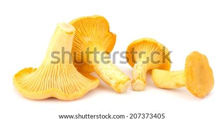 Yellow chanterelle isolated on white background - stock photo