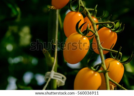Healthy Fruits Red Wine Grapes Background Stock Photo 546354151 Shutterstock