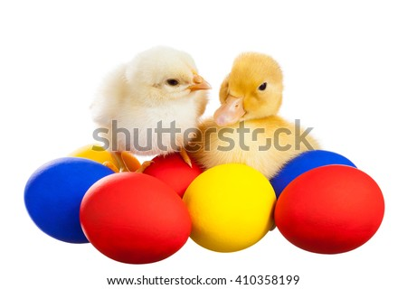 Yellow chick and the duckling sitting on colorful eggs - stock photo