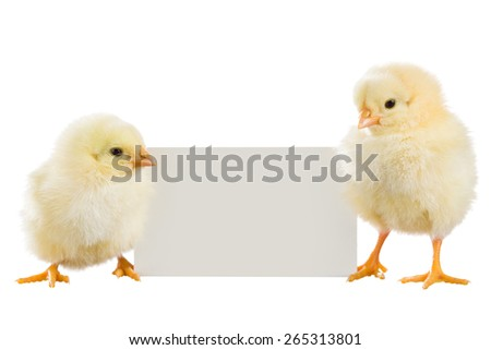 Yellow Chicks with the sheet for text