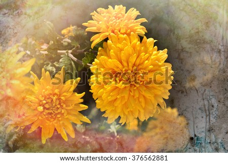 Yellow chrysanthemum on rustic background - stock photo