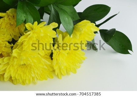 yellow chrysanthemums with green leaves