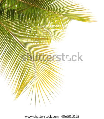 Yellow coconut leaf frame isolated on white background - stock photo