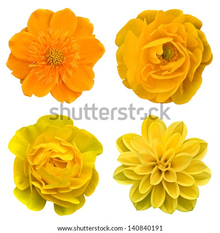 Yellow collage flowers - stock photo