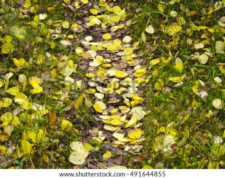 Yellow colorful aspen leaves on the ground in autumn