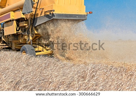 yellow combine harvester working in wheat field  - stock photo