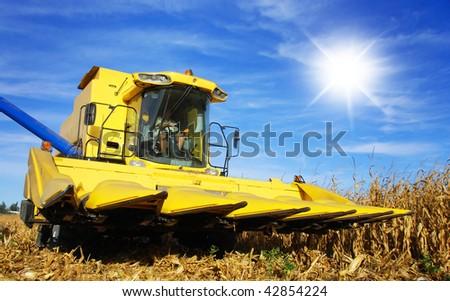 Yellow combine harvesting maize on a farm - stock photo