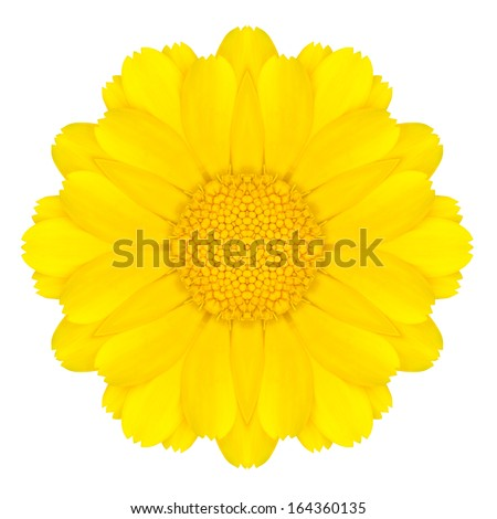 Yellow Concentric Daisy Flower Isolated on White Background. Kaleidoscopic Mandala Design