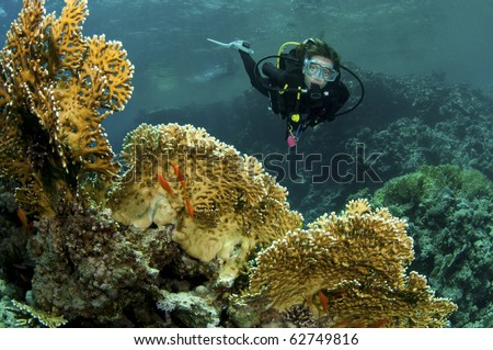yellow coral and female scuba diver - stock photo