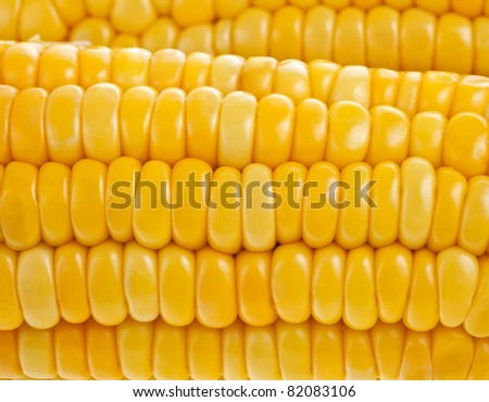 yellow  corn ear,  close up  macro surface top view  background - stock photo