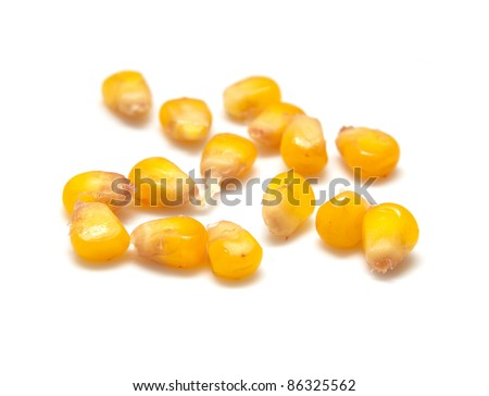yellow corn grain on white background