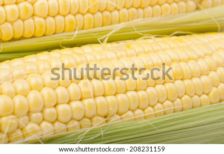 Yellow corn isolated on white