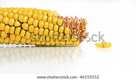 Yellow Corn Kernels Isolated on white background - stock photo