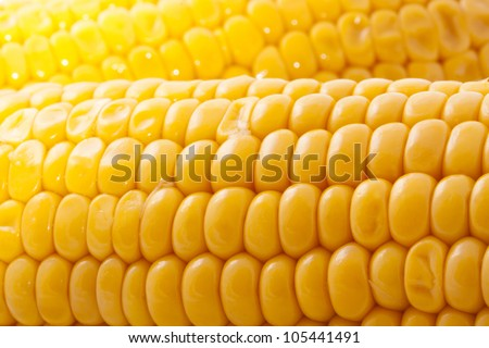 Yellow corn macro shoot for background use