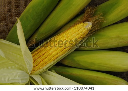 yellow corn on sack background - stock photo