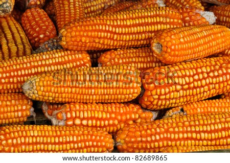 Yellow corn, raw and dry