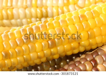 Yellow corn shelling - stock photo