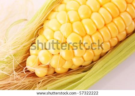 Yellow corns - stock photo