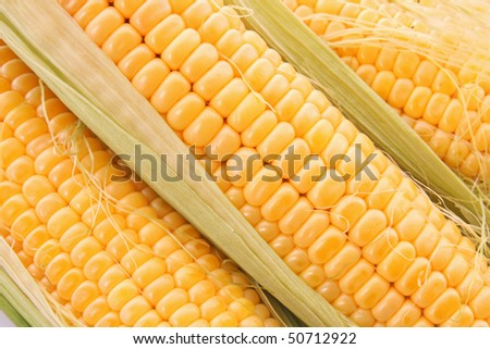 Yellow corns background