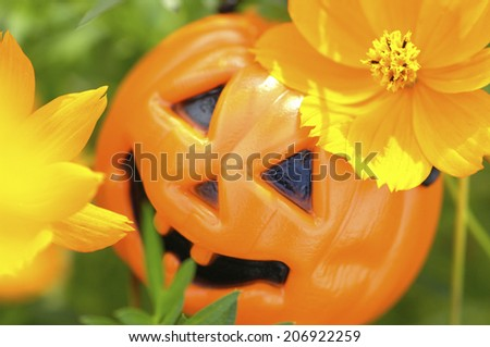 Yellow Cosmos And The Halloween Pumpkin