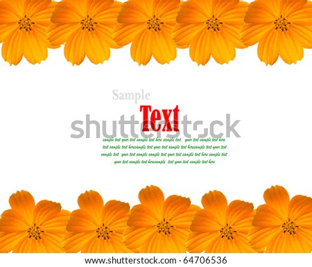 Yellow Cosmos Background with copy-space. (Beautiful yellow flower frame.)