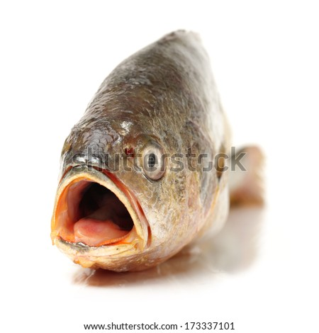 Yellow Croaker Fish On White background  - stock photo