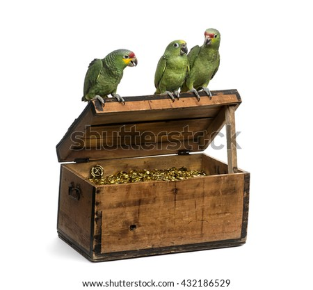 Yellow-crowned Amazon and a Red-lored amazon on a pirate chest, isolated on white - stock photo