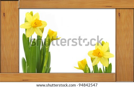 Yellow Daffodils Flowers, wooden frame. - stock photo