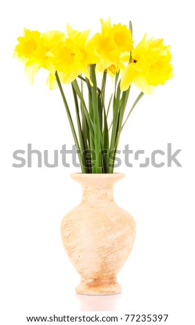 Yellow daffodils in a vase isolated on white