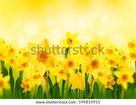 Flowers Stock Photos  1853581 Images  dreamstimecom
