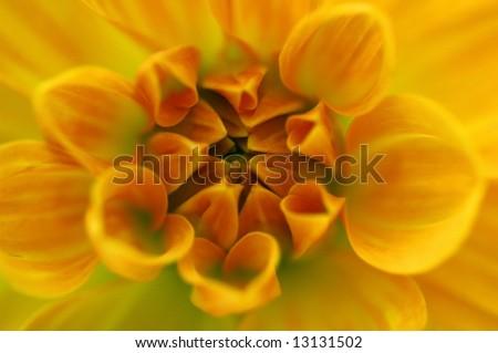 Yellow Dahlia - stock photo