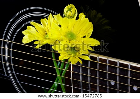 Yellow daisies in the strings of a black guitar - stock photo