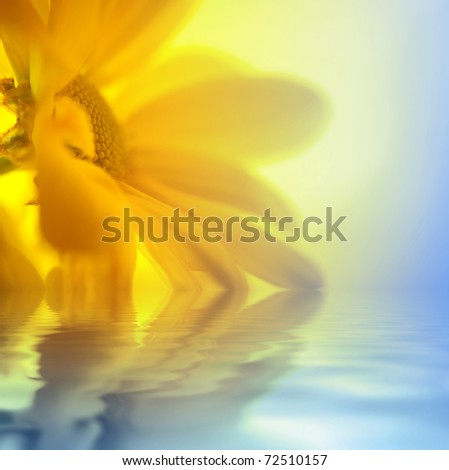 Yellow Daisy closeup over water in sunny light - stock photo