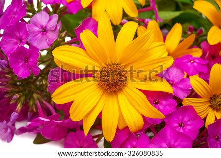 Yellow daisy flowers and purple phlox isolated on a white background - stock photo