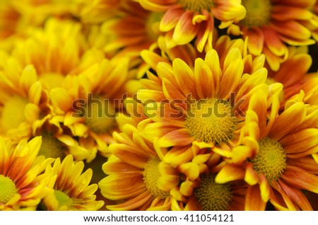 Yellow daisy flowers, floral background.