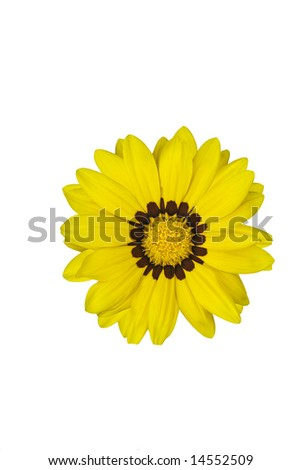 Yellow Daisy with Brown Ring - stock photo