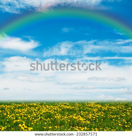 Yellow dandelion flowers, blue sky and rainbow - stock photo
