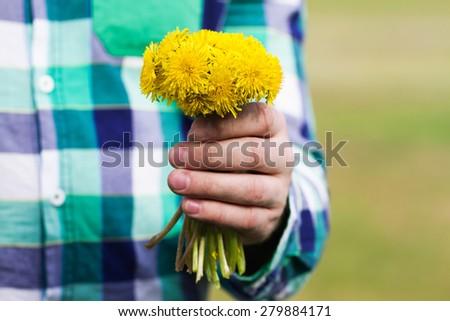 Yellow dandelion flowers in male hand - stock photo
