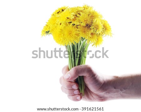 Yellow dandelions isolated on white background. Spring flower
