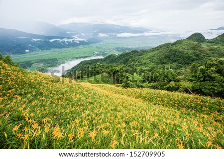 Yellow day lily garden on the hill - stock photo