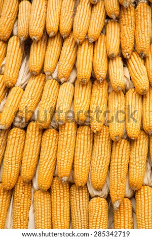 Yellow dried corn bundle together texture