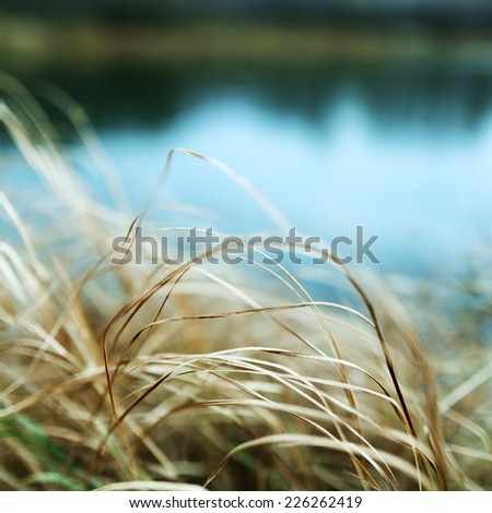 Yellow Dried Grass by the River Autumn dry grass background Selective focus - stock photo