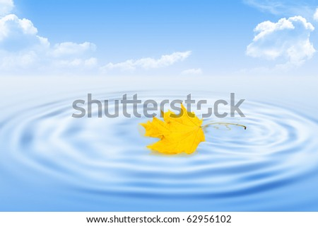 Yellow dry maple leaf on water - stock photo