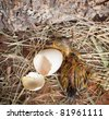 Yellow duckling hatching from its white egg - stock photo