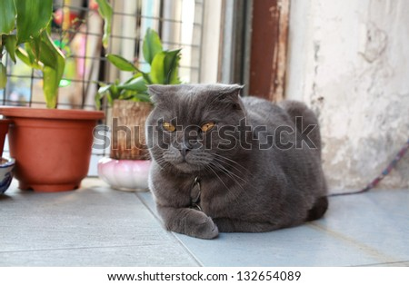 yellow eye fat cat on the street - stock photo